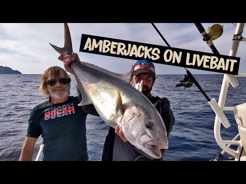 Crazy Amberjack and Dentex fishing in Mallorca!