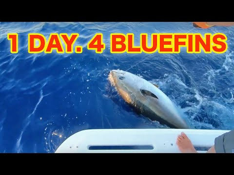 Fishing in Mallorca - 4 bluefins in one day